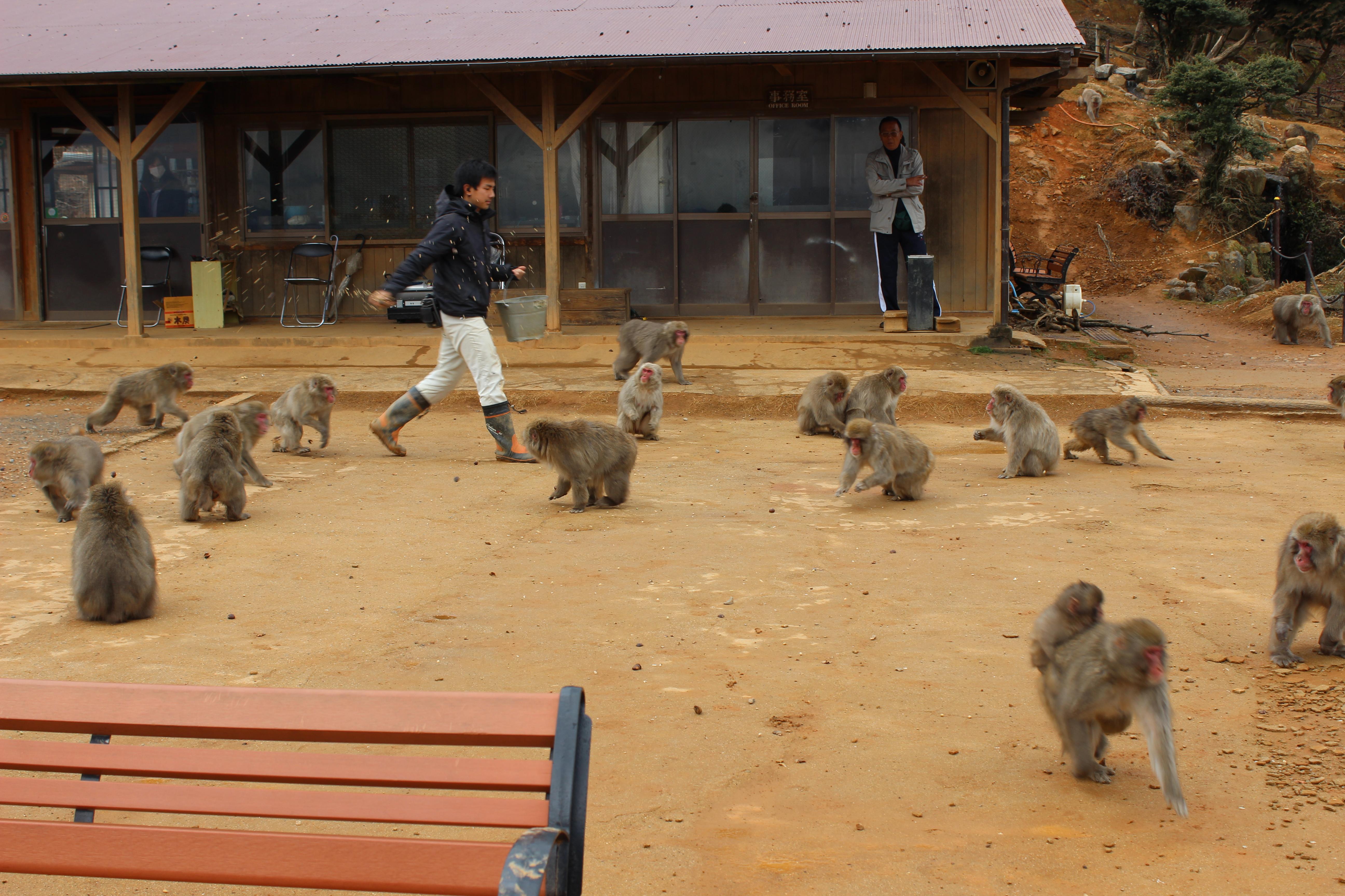 Monkey's getting fed